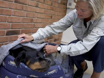 Operation på Dyreklinik Odense, operation Hund, operation Kat